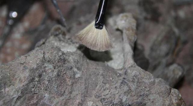 Arjantinde 70 milyon yıllık dinozor kalıntıları bulundu