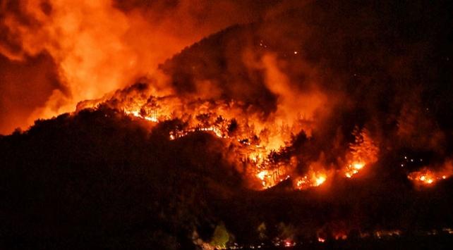 2020de yangınlarda zarar gören orman alanı 2019u geçti