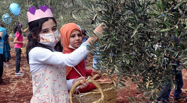 Suriyeli yetim çocuklar barış ve kardeşlik için zeytin topladı