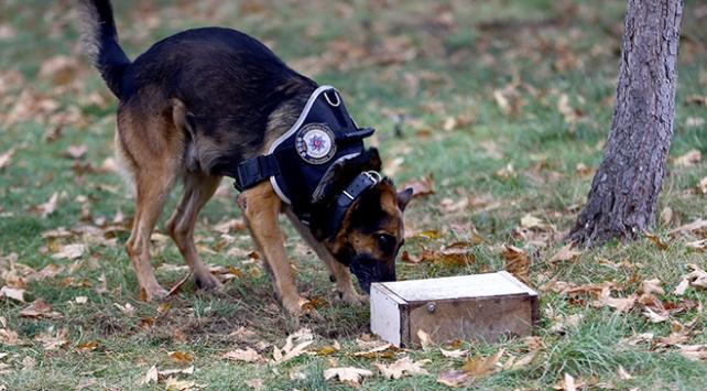 Dedektör köpek Alex sayesinde arama süresi 3 dakikaya iniyor