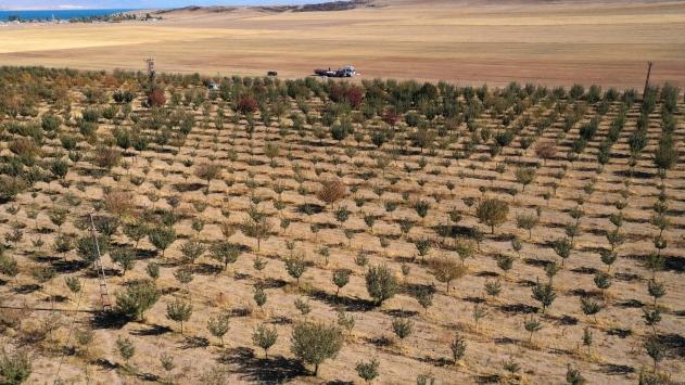 Bitliste devlet desteğiyle oluşturulan elma bahçelerinden 20 milyon lira gelir bekleniyor