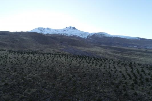 Erciyes Dağına 7 yılda 5 milyon fidan dikildi