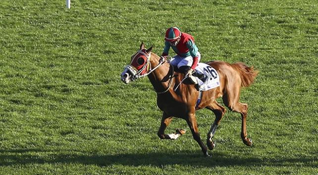 At yarışlarında Cumhurbaşkanlığı koşusu yarın yapılacak
