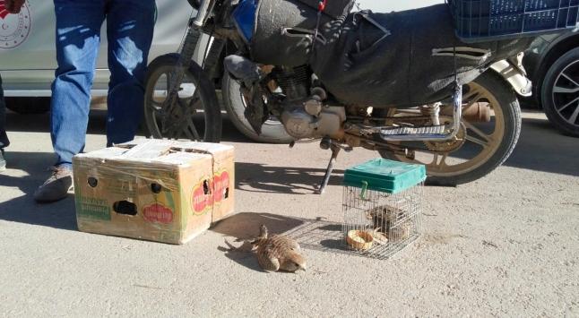 Canlı hayvan tuzağıyla şahin yakalayan 9 kişiye 41 bin 780 lira ceza verildi