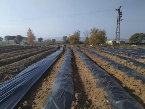 Edirnede köylüler her mevsim ürün veren çilek üretimiyle kazanacak