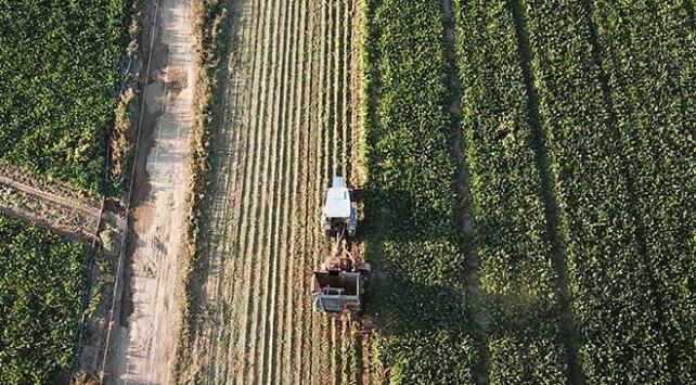Tarım Ürünleri Üretici Fiyat Endeksi ekimde arttı