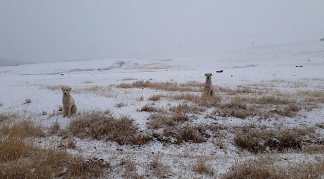 Ağrının yüksek kesimleri karla kaplandı