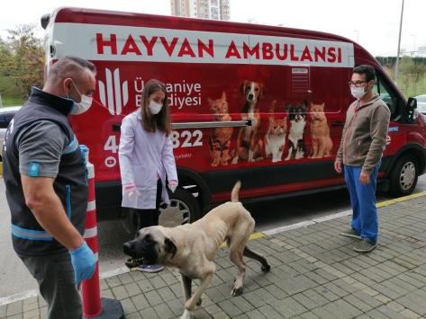 Ümraniyede oyuncu Hasan Kaçanın bulduğu hasta köpek tedavi edildi
