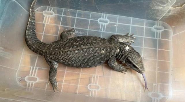 Yasa dışı yollarla tropik hayvan satışı yapan iki kişi yakalandı