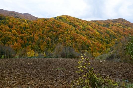 """""""Saklı cennet"""" Şenpazar sonbaharın renkleri"""
