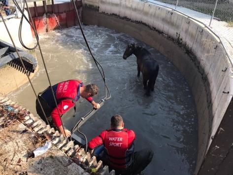 Denizlide sulama kanalına düşen atı itfaiye kurtardı