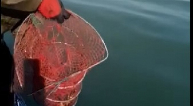 Eğirdir Gölünde 400 kerevit pinterine el konuldu