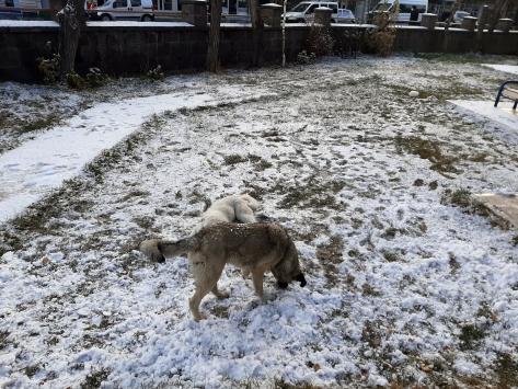 Ardahana mevsimin ilk karı yağdı