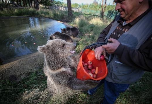 Yavru boz ayılar Ovakorusunun maskotu oldu
