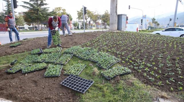 Tokatta park ve bahçelere 130 bin çiçek dikiliyor