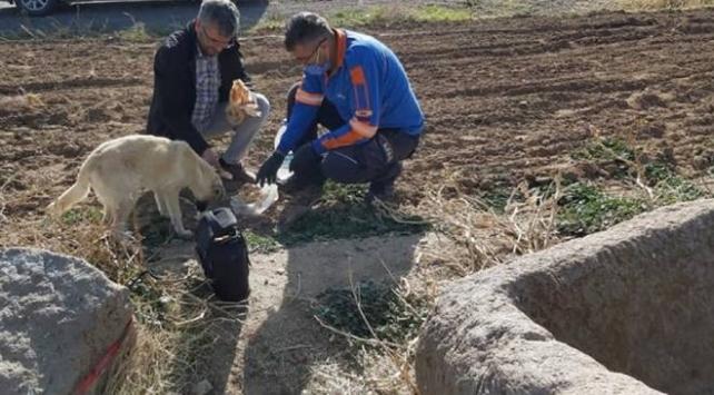Kuyuya düşen köpeği AFAD ekipleri kurtardı