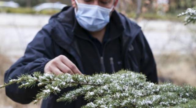 Ankarada mevsimin ilk karı