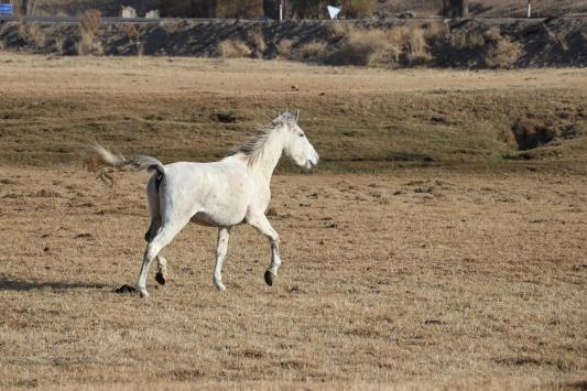 Ağrıda sonbaharda dağlarda otlayan atlar doğaya renk katıyor