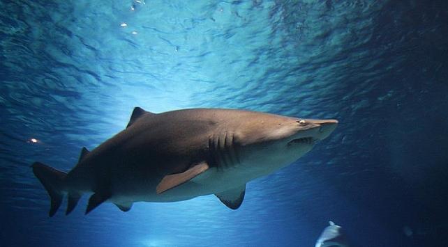 Avustralyada köpek balığı saldırısına uğrayan adam öldü