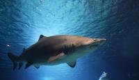 Avustralya'da köpek balığı saldırısına uğrayan adam öldü