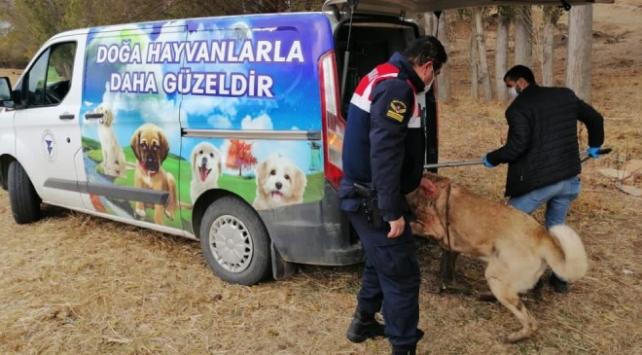 Yozgatta köpek dövüşü organize eden 8 kişi yakalandı