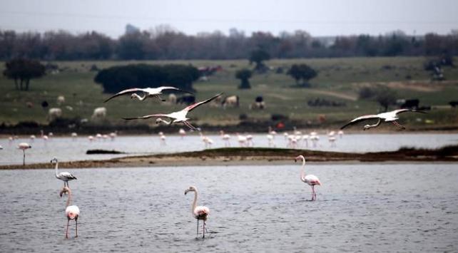 Gala Gölünde kaçak avcılıkla mücadele artırılacak