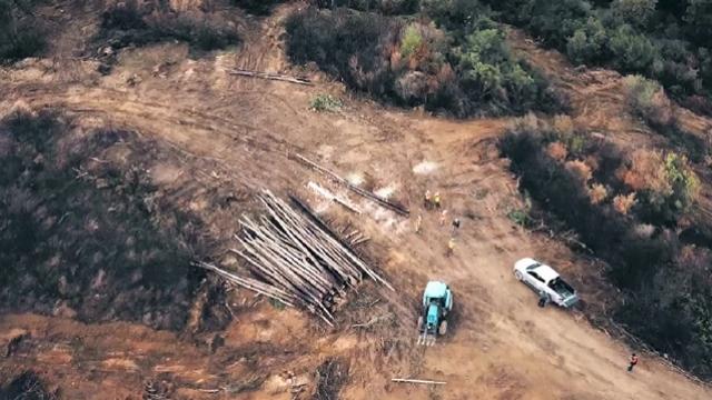 Yanan ormanlık alanlar yeniden yeşilleniyor