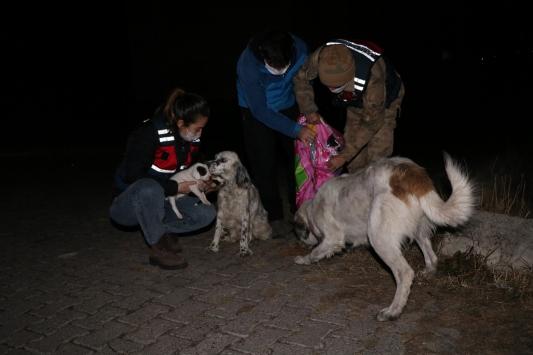 Ardahanda Mehmetçik karla kaplanan doğada yiyecek bulamayan sokak hayvanlarını unutmadı