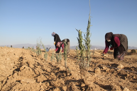 Konyadaki ata topraklarında devasa lavanta bahçesi kurdu