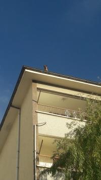 Çatıda kalan köpeği, itfaiyeciler kurtardı