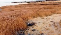 Van Gölü'nde Urartular dönemine ait liman kalıntıları ortaya çıktı