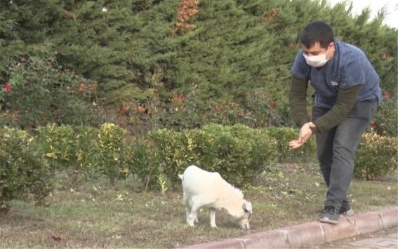 Balıkesirde akaryakıt istasyonunda 2 köpeğin ezilmesiyle ilgili adli işlem başlatıldı