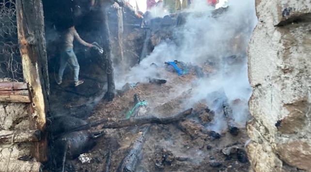 Manisada ağılda yangın: 40 hayvan telef oldu