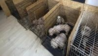 Ankara'da binanın bodrumunda 68 köpek bulundu