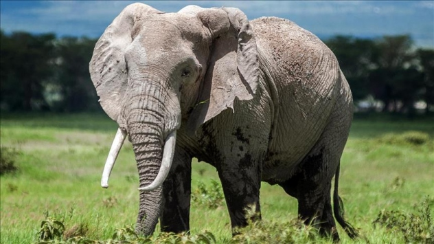 Namibya 170 filini satışa çıkarıyor