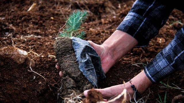 TFFden Orman Projesi kararı