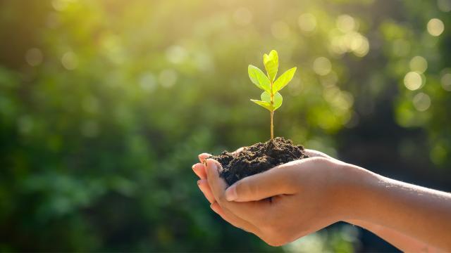 2023 hedefi: 1,6 milyar fidanı toprakla buluşturmak