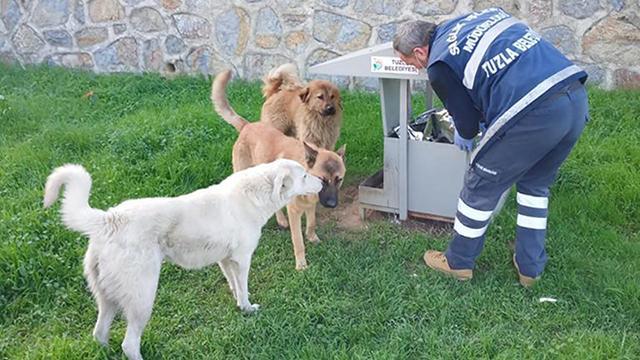Belediyeden sokak hayvanlarına yem ve mama desteği