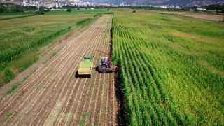 Tarım ÜFE kasımda yıllık yüzde 20,76 arttı