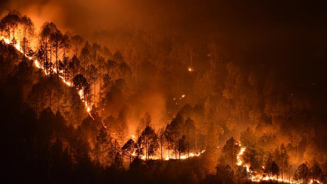 Muğlada çıkan orman yangını söndürüldü