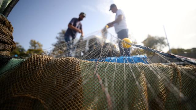 Kuralık nedeniyle balık fiyatlarında artış tahmini