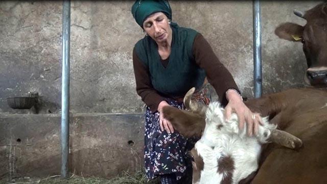 Zehirlenen ineklerinin başında gözyaşı döktü
