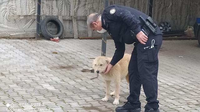 Köpeğe eziyete 947 lira para cezası