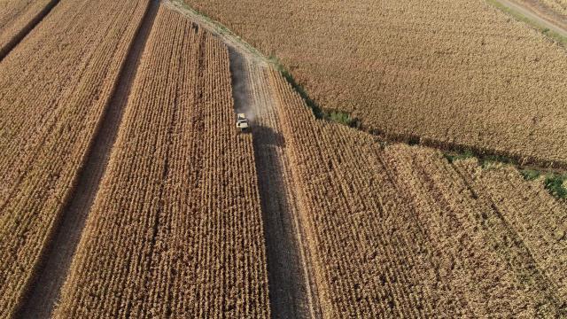 TMO buğday alım fiyatlarını açıklayacak