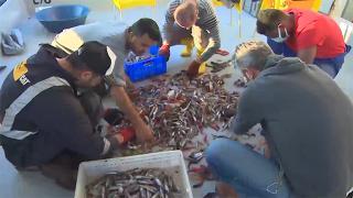 Akdeniz'deki balık popülasyonunda büyük azalış