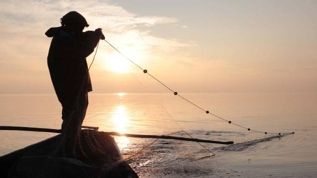 Karadeniz somonu ihracatında gelir yüzde 188 arttı