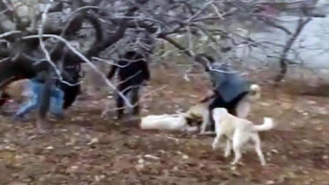 Gaziantepte köpek dövüştüren 4 kişiye 32 bin lira ceza