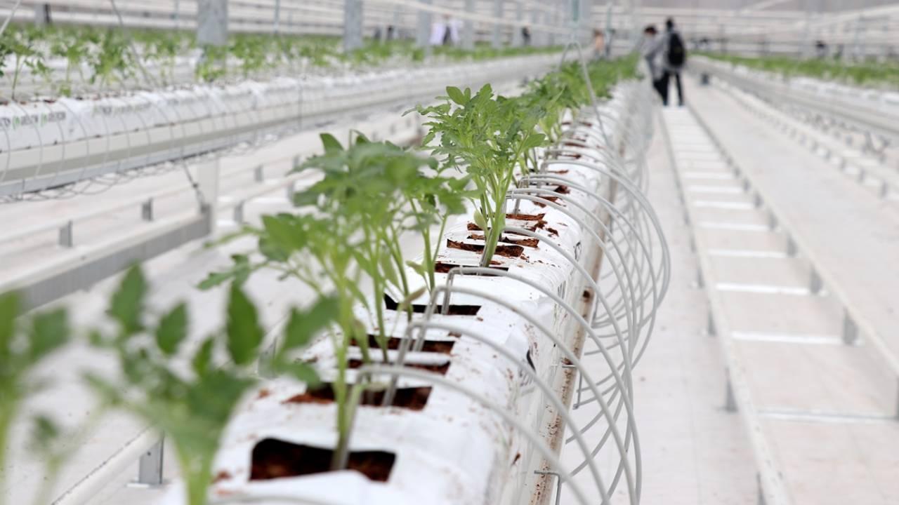 Tarıma elverişsiz olan arazi topraksız sera yatırımıyla katkı sağlayacak