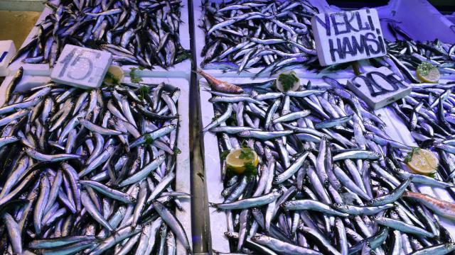 Trabzonlu balıkçılar satışlardan memnun