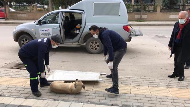 Çiftlikköy belediye başkanının fark ettiği hasta köpek, veteriner hekimlerce sağlığına kavuşturuldu